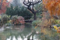 Margaret Island - Japanese garden in Autumn